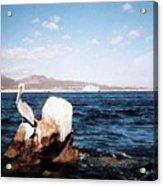 Cabo San Lucas Pelican Acrylic Print