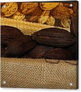Cacao Pods Acrylic Print
