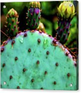 Cacti And Friends Acrylic Print