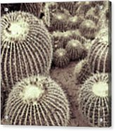 Cacti Community Acrylic Print