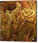 Cacti Family Reunion Acrylic Print