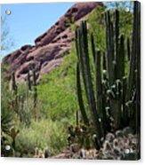 Cacti Garden Acrylic Print