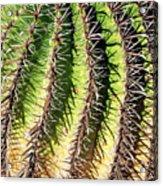 Cacti Needles Acrylic Print