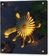 Cactu Sundown Acrylic Print