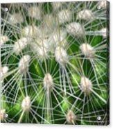 Cactus 1 Acrylic Print