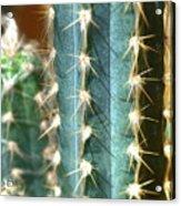 Cactus 3 Acrylic Print
