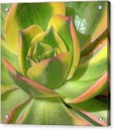 Cactus 4 Acrylic Print