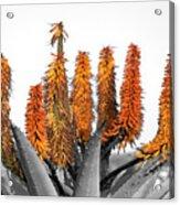 Cactus 5 Acrylic Print