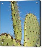 Cactus Against Blue Sky Acrylic Print