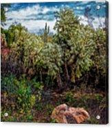 Cactus And Bird Acrylic Print