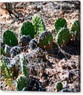 Cactus, Arches National Park Acrylic Print