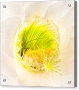 Cactus Bloom Number Five Acrylic Print