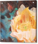 Cactus Blossom 1 Acrylic Print