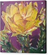 Cactus Blossom On Purple Background Acrylic Print
