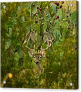 Cactus Buck Acrylic Print
