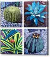 Cactus Close Ups Acrylic Print