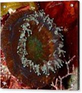 Cactus Coral Feeding At Night Acrylic Print