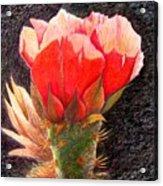 Cactus Cutie Acrylic Print