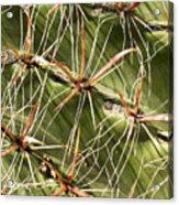 Cactus Diagonal Pattern Acrylic Print