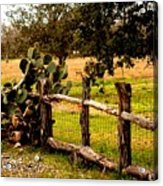 Cactus Fence Line Acrylic Print