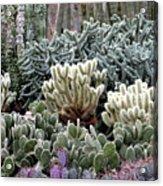 Cactus Field Acrylic Print by Rebecca Margraf