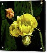 Cactus Flower 07-010 Acrylic Print