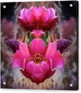 Cactus Flower 07-02 S08 Acrylic Print