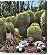 Cactus Galore  Acrylic Print