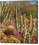 Cactus Garden II Acrylic Print