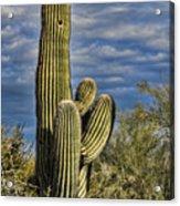 Cactus Home Acrylic Print