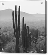 Cactus In Black And White Acrylic Print