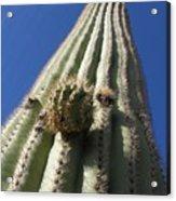 Cactus In The Sky  Acrylic Print