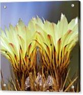Cactus Life Acrylic Print