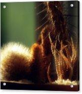 Cactus Light Acrylic Print