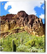 Cactus On The Mountainside Acrylic Print