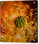 Cactus Pistil Acrylic Print