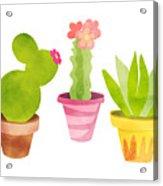 Cactus Plants In Pretty Pots Acrylic Print