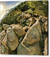 Cactus Rock Acrylic Print