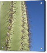 Cactus Side View Acrylic Print