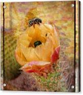 Cactus Spring Beauty W Frame Acrylic Print