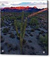 Cactus Sun Beam Acrylic Print