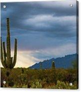 Cactus Sunset Saguaro National Park Arizona Acrylic Print