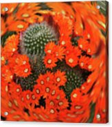 Cactus Swirl Acrylic Print
