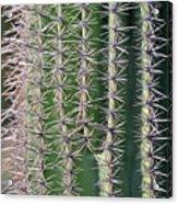 Cactus Thorns Acrylic Print