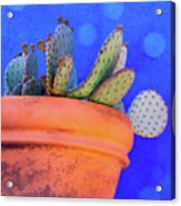 Cactus With Blue Dots Acrylic Print