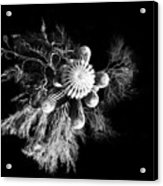 Cactus With Palo Verde Acrylic Print