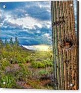 Cactus With Teeth Acrylic Print