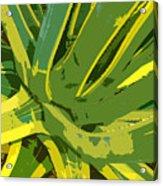 Cactus Work Number 2 Acrylic Print