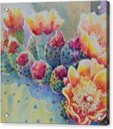 Cactus Flowers Acrylic Print