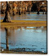 Caddo Lake 2016 Acrylic Print